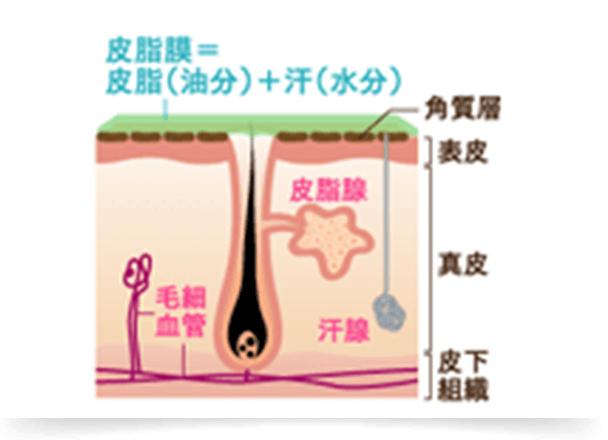 皮脂の働きイメージ
