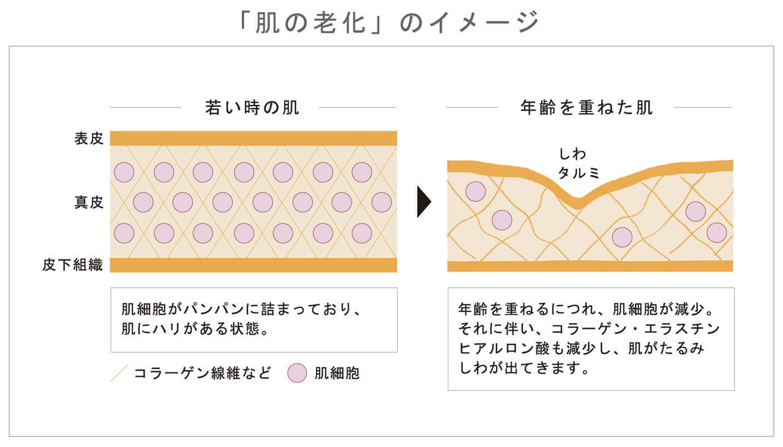 「肌の老化」のイメージ